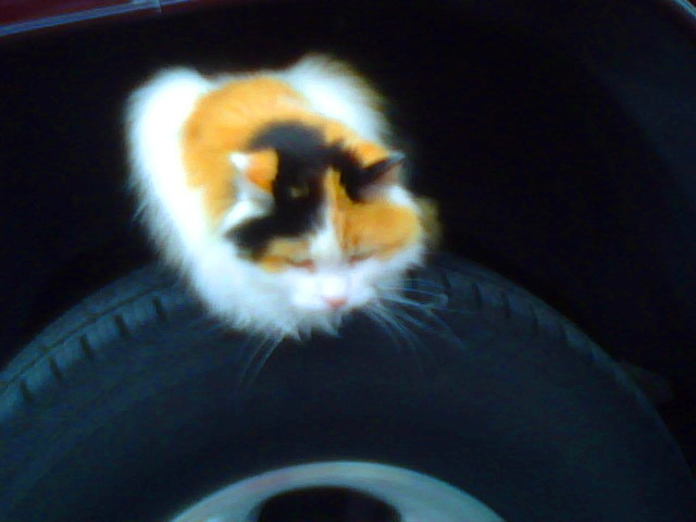 Piper-On-Tire